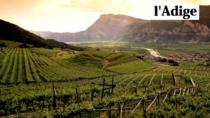 Vino, produzione di Trentino DOP a 308 mila ettolitri: +5,4%