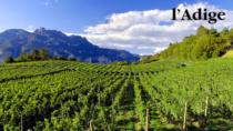 Vino, via alla riforma della DOP Trentino