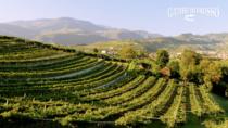Ecco come il Consorzio per la tutela dei vini Valpolicella cambia passo