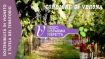 Valpolicella DOP: parte il progetto del Consorzio sulla sostenibilità