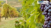 Vini di Romagna: ecco perché siamo un consorzio
