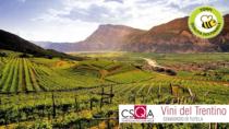 Consorzio Vini del Trentino, confermata la certificazione per la produzione integrata di CSQA