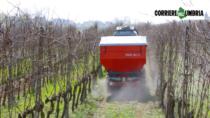 """Il Consorzio Vini Orvieto DOP lancia il progetto """"Viticoltura di precisione"""""""