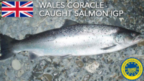 West Wales Coracle Caught Salmon IGP – Regno Unito