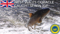 West Wales Coracle Caught Sewin IGP - Regno Unito