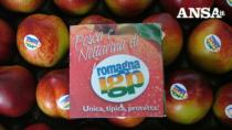Pesche e nettarine di Romagna IGP decimate da gelate: urgente modifica al disciplinare