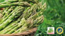 Asparago Verde di Altedo IGP, attesa produzione di qualità