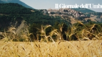 Farro di Montenapoleone DOP: un volume dedicato al prezioso cereale