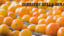 Agroalimentare a tutto export
