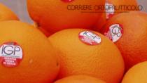 Arancia Rossa di Sicilia IGP sponsor del Giro d
