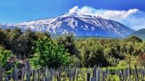 I vini vulcanici attirano ai piedi dell'Etna 50mila winelovers italiani e stranieri