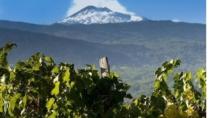 Volcanic Wines. Quanto vale per l'Italia il vino dei vulcani?