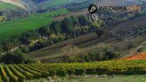 Colline Teramane Montepulciano d'Abruzzo DOP: video appello di 28 produttori vitivinicoli