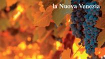 Consorzio Vini Venezia, primo trimestre in crescita poi il crollo, resiste export e GDO