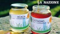 Miele di Lunigiana DOP: sono tornate le api, sarà un