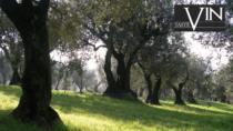 Olio Veneto DOP, nuovo messaggero di qualità