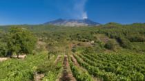 Vini vulcanici: una nicchia ma di grandi potenzialità