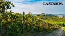 Il Nizza DOP si presenta su Instagram: vigne, turismo e enogastronomia