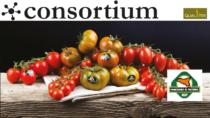Il Pomodoro di Pachino IGP adatta gli impianti alla pandemia