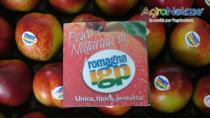 Pesca e Nettarina di Romagna IGP in arrivo la minor produzione di sempre