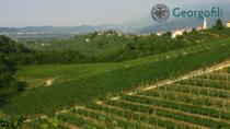 Conegliano Valdobbiadene-Prosecco DOP, viticoltura e salute: accuse infondate
