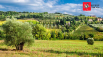 Presentazione online della Selezione oli EVO DOP e IGP della Toscana