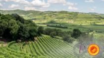 Consorzio Vini Valpolicella: Olga Bussinello lascia la carica di direttore