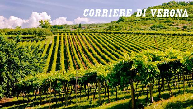 Consorzio Vini Valpolicella, Sartori: serve fare l