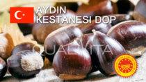 Aydın Kestanesi DOP - Turchia