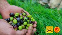 Olio DOP Riviera Ligure: in crescita i contratti del Patto di Filiera