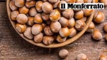 Piemonte, per la nocciola annata di qualità ma prezzi ancora bassi