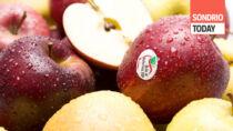 Mela di Valtellina IGP, stagione positiva: qualità alta e buone pezzature