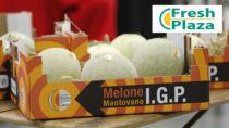 Melone Mantovano IGP: ottima annata con un aumento di un terzo di confezionato IGP
