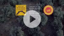 Riviera Ligure DOP Olio EVO, campagna olivicola olearia 2020
