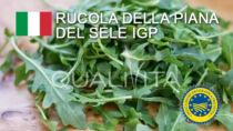 Rucola della Piana del Sele IGP - Italia