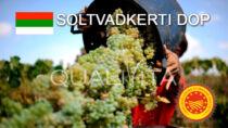 Soltvadkerti DOP - Ungheria