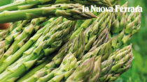 Asparago Verde IGP di Altedo, una produzione eccellente