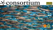 Certificare la qualità delle produzioni ittiche italiane