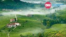 Conegliano Valdobbiadene - Prosecco DOP: 92 milioni di bottiglie certificate nel 2020
