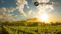 Montecucco DOP, il vino che si fa spazio tra i grandi di Toscana