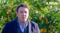 Consorzio Arancia Rossa di Sicilia IGP, no a vendita sottocosto