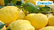 Tutela del Limone Costa d