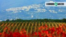 Consorzio di Tutela dei Vini DOC Cortona, i progetti per il 2021