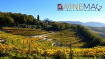 Consorzio di tutela vini Valpolicella: meno produzione, più sostenibilità