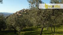 Ambasciatori dell'Olio dell'Umbria: il progetto a sostegno dei ristoranti di qualità
