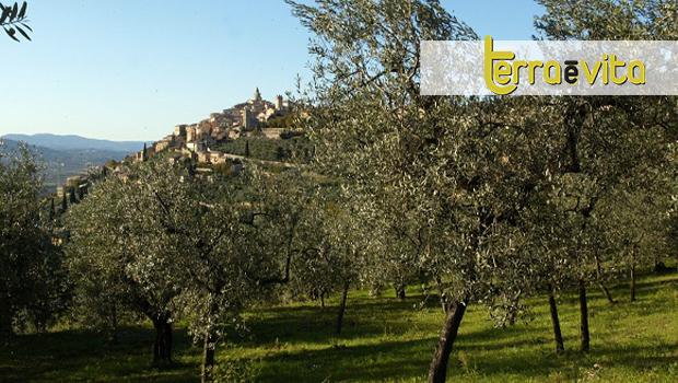 Strada dell'Olio extravergine di oliva Dop Umbria_CS_Terraèvita