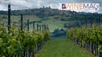 Il Verdicchio dei Castelli di Jesi DOP, ovvero la versatilità fatta vino