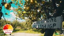 """""""Scent of Zagara"""", il travel video del Distretto Agrumi per il rilancio turistico della Sicilia post-covid"""