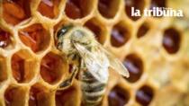 Frutta e Miele delle Dolomiti Bellunesi DOP: salgono in Veneto i danni causati dal gelo