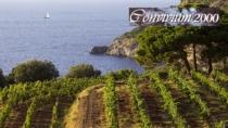 Maremma Toscana DOP: una proposta enologica ampia e variegata
